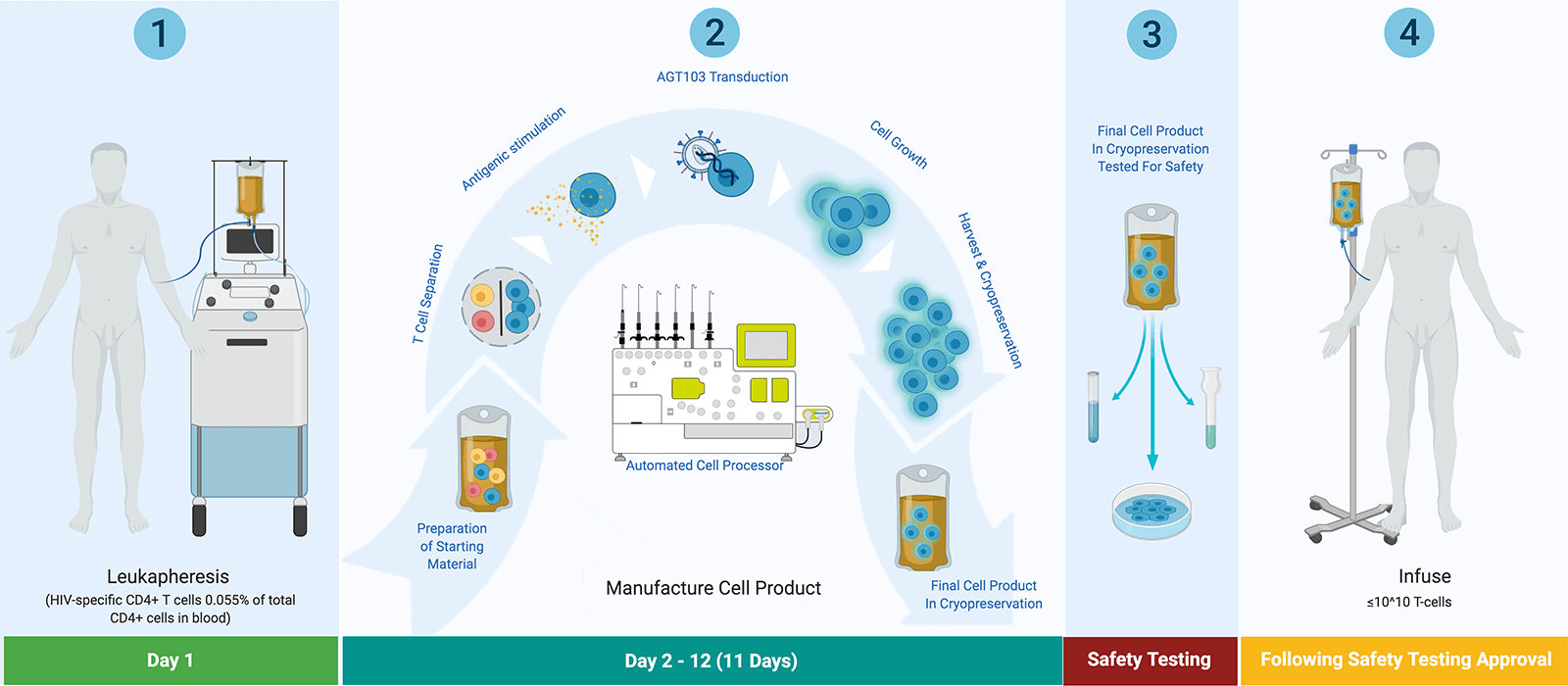 American-Gene-Technologies-HIV-Cell-Product-Process-Web