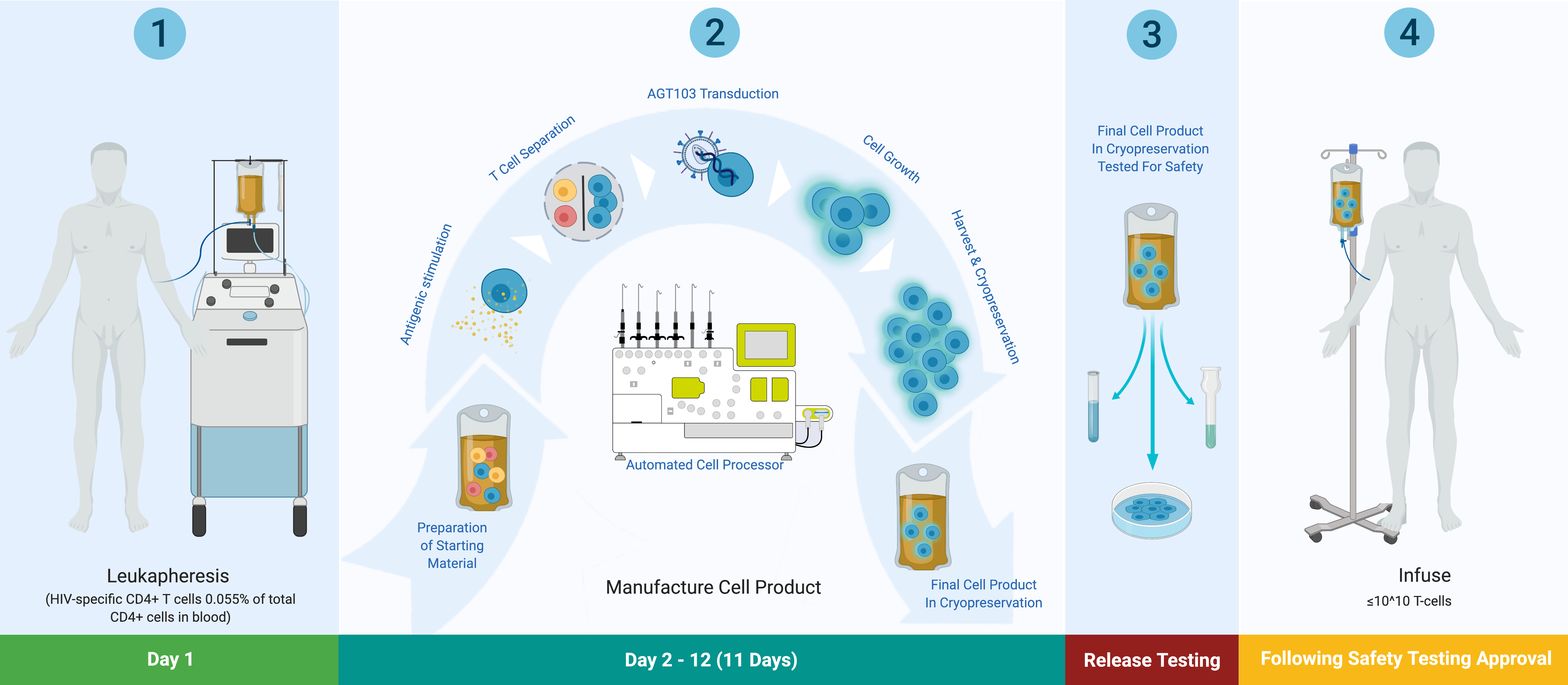 HIV Cell Product Process